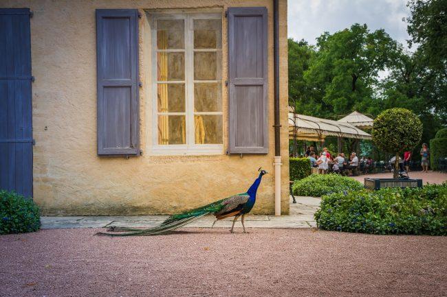Les Jardins de Marqueyssac, Dordogne, France. Event venue for your wedding or corporate party. jpg